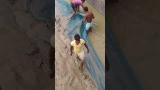 Kolkata ganga river fishing video