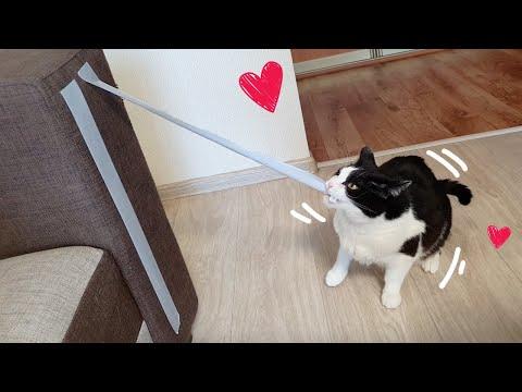Tape Eater. Cat Broke The System