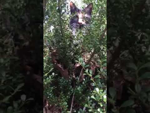 Naomi In Big Bush