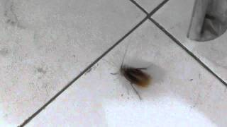 Effects of Carbofuran(1%) on Cockroach