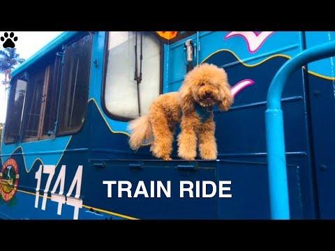 RAILWAY TRAIN RIDE DOG DRIVER KURANDA - DIY Dog FUN&Food by Cooking For Dogs