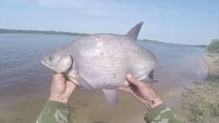 Ловля леща на донку, видео rybachil.ru(Ловля леща с берега летом. http://rybachil.ru., 2016-06-12T19:08:24.000Z)