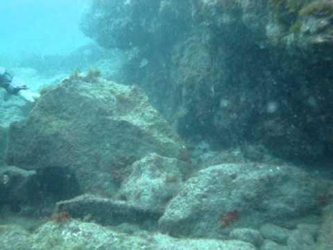teneryfa, puertito, el, nurkowanie, scuba, diving, tauchen, tenerife, underwater, unterwasser