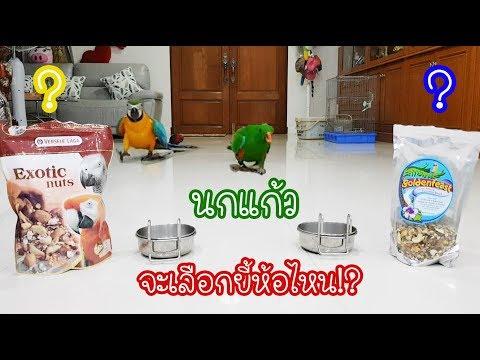 รีวิวนกแก้ว: นกแก้วจะเลือกอาหารยี้ห้อไหน?? EP.50