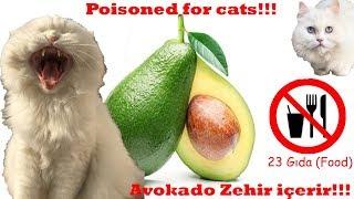 Kediler İçin Zararlı Yiyecekler (Harmful Foods for Cats)