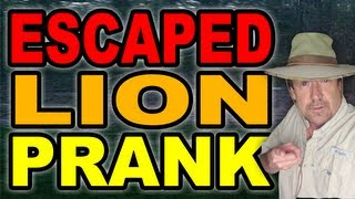 Repeat youtube video Escaped Lion Prank by Tom Mabe
