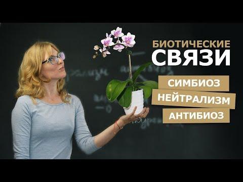 Биология | Выгодные отношения в природе: 3 типа комменсализма