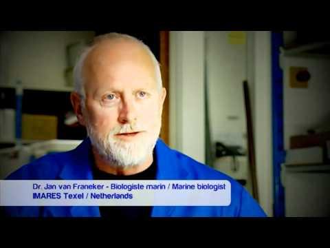 Marine litter - Ocean Report