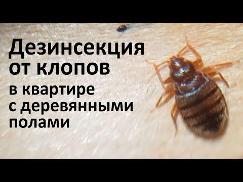 Видео: Сложная дезинсекция от клопов в Москве: деревянные полы, трещины в стенах и старые обои в квартире