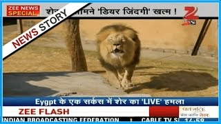 Lion attacks its trainer during a live show in Egypt