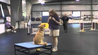 Mesa Open Agility, Queen City Dog Training Club