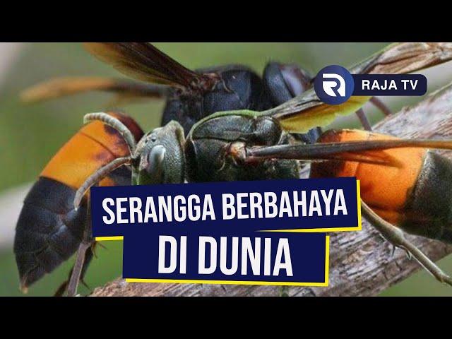 Serangga Paling Berbahaya di Dunia