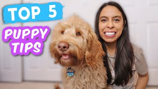 New Puppy Tips EVERYONE Should Teach  Easy & lifesaving cues