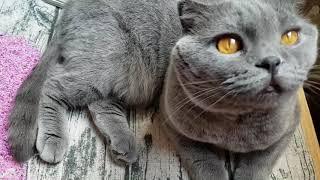 Кошечка и бисер/My cat