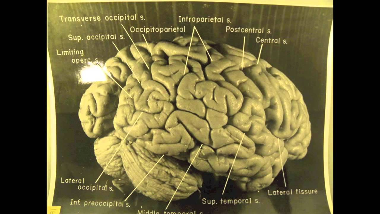 Image result for Albert Einstein's Brain youtube