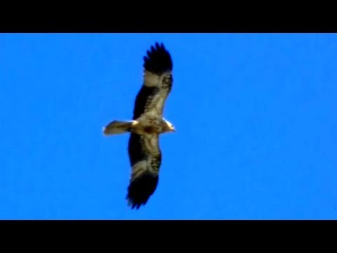 Giant Eagle Compilation 2013