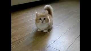 Mon chaton trop mignon !!