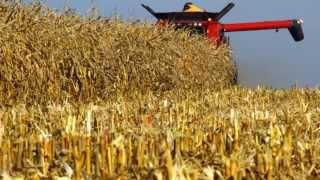 Żniwa kukurydziane 2013- Case 5130 / Fendt 714 / Fendt Farmer 309 w akcji !
