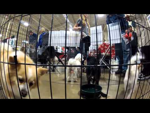 We GoPro At The Amazing Pet Expo - San Diego