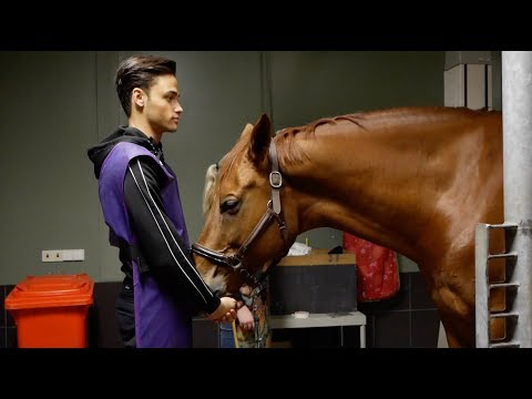 FINDING OUT WHATS WRONG WITH MY HORSE|| MATT HARNACKE