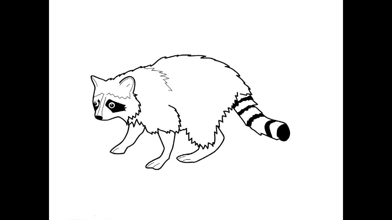 How to Draw a Raccoon / Как нарисовать енота - YouTube Raccoon Drawing Easy