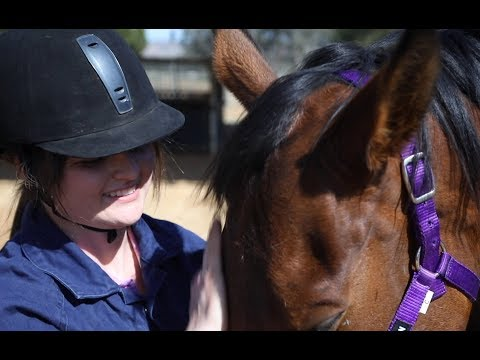 Bachelor Of Equine Science At Charles Sturt