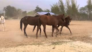 ฟาร์มม้า ฝากม้า ขายม้า ที่กาญจนบุรี 0818443005
