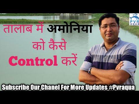 अमोनिया क्यों बनती है| How To Control Ammonia In Pond | 2020 New Video| Pvraqua