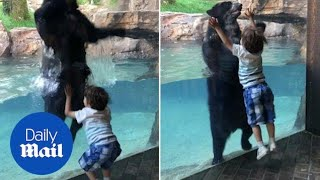 Adorable moment five-year-old and Andean bear jump together - Daily Mail