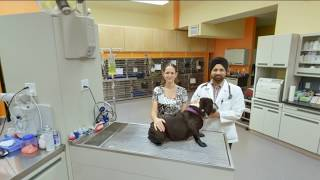 South Seattle Veterinary Hospital | Seattle, WA | Veterinarians