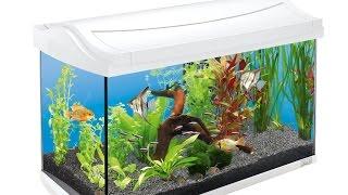 Neues Aquarium: Tipps für Einsteiger