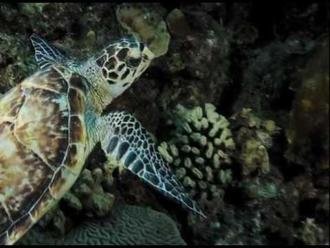Ocean Acidification: Where will all the seashells go?