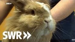 Ein Kaninchen, eine Katze und ein Pferd | SWR Tierarztgeschichten