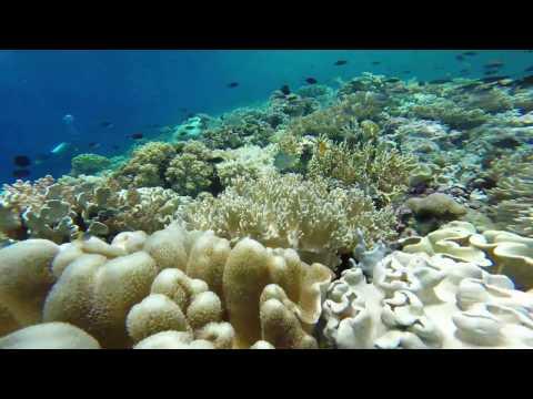 Wakatobi Scuba Diving _ Beautiful Life
