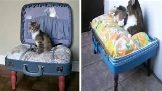Оригинальные лежанки для кошек из чемоданов