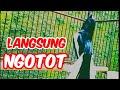 Kacer Gacor Full Isian Pancingan Kacer Gacor Langsung Ngotot Hobi Kita  Mp3 - Mp4 Download