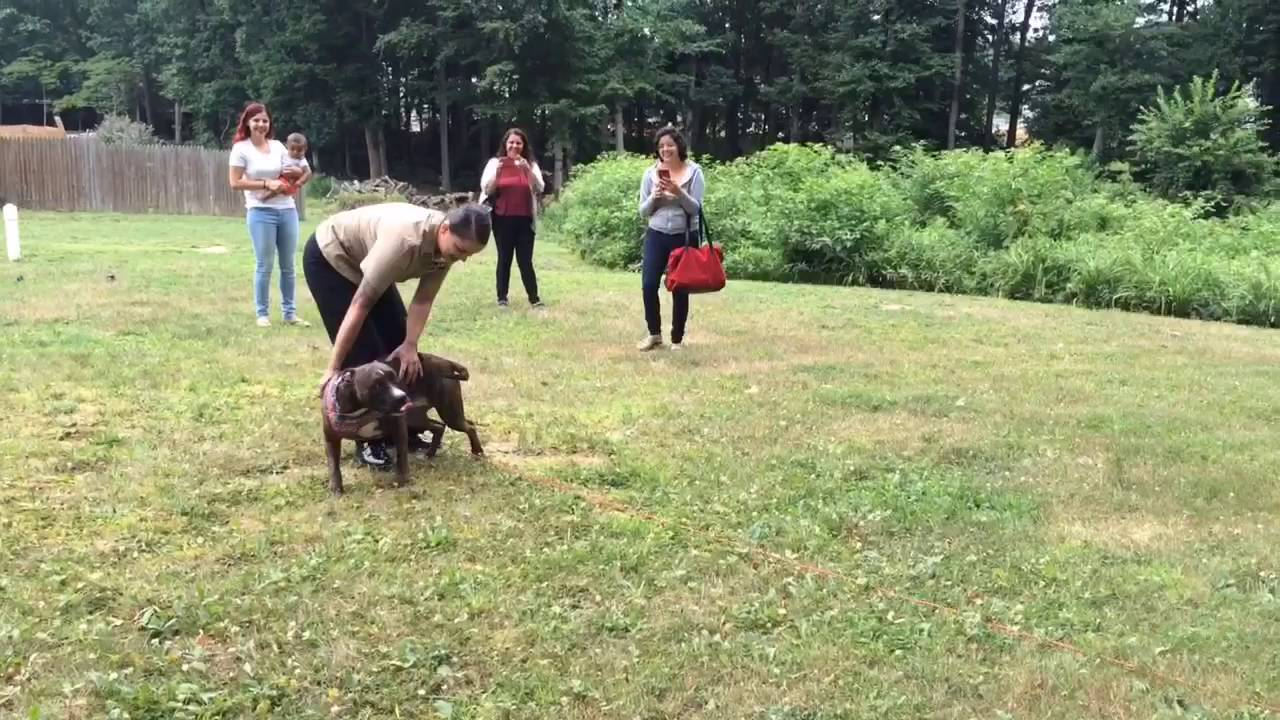 Soldier Reunited With Dog Youtube