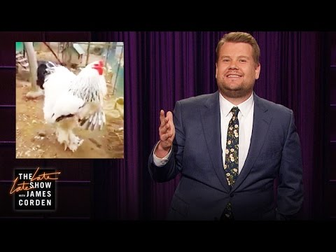 Seriously, How Can a Chicken Be So Giant?