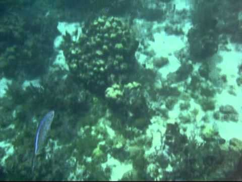 Dominikanische Republik Catalina & Saona Island
