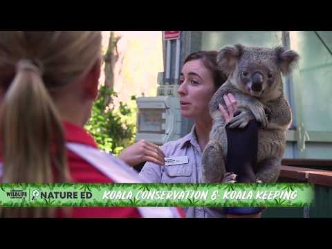 Currumbin wildlife sanctuary koala photo price