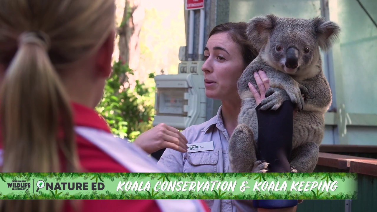 video Currumbin Wildlife Sanctuary Tickets