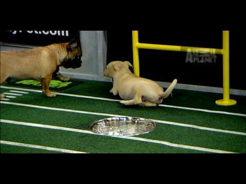 Puppy Bowl VI- Puppy Touchdown