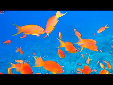 Подводный мир Montazah