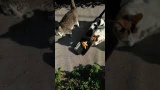 Смешные коты мяукают. Funny Cats Meow. Lustige Katzen. Gatos Graciosos. Chats Drôles. Kucing Lucu. 猫