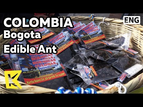 【K】Colombia Travel-Bogota[콜롬비아 여행-보고타]보양식 식용개미/Edible/Ant/Queen