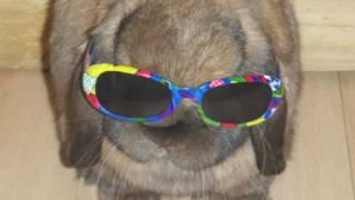 sooty rabbit