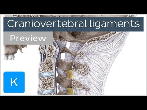 Craniovertebral Ligaments And Joints (preview) - Human Anatomy  Kenhub