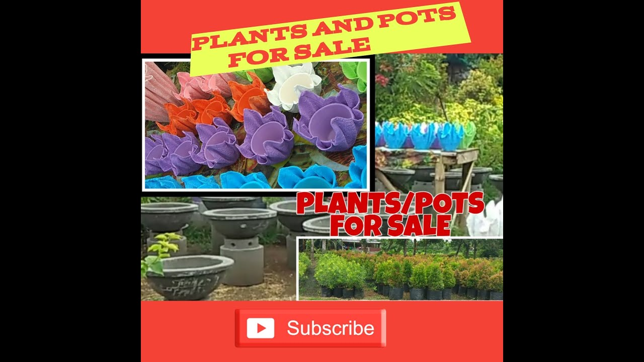 Plants And Pots For Sale Padre Garcia Batangas Youtube