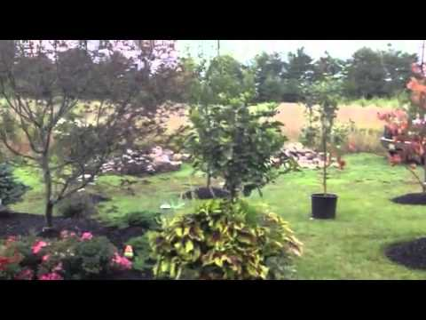 Cherry Hill Landscaping - Lawn Care - Lawn - Cherry Hill - New Jersey - NJ - Adams Landscaping