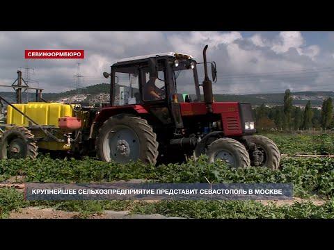 Крупнейшее сельхозпредприятие представит Севастополь в Москве